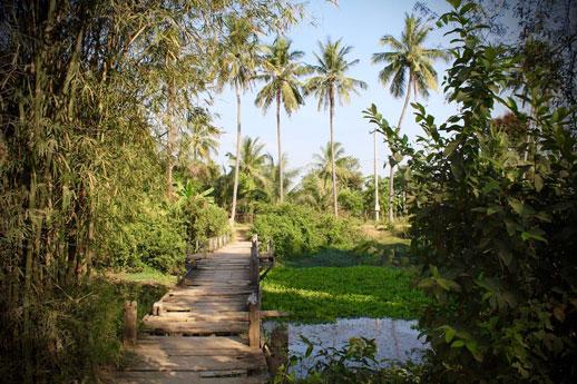 jungle-bridge