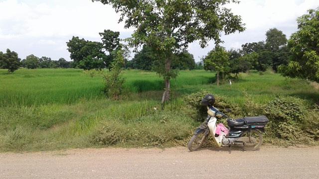 moto-rice-field