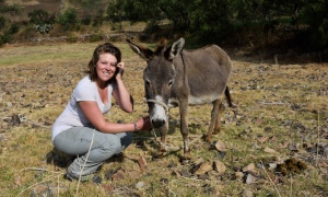 Buying a Donkey in Peru