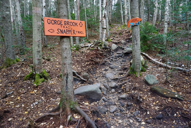Gorges Brook Trail and Snapper Trail Moosilauke