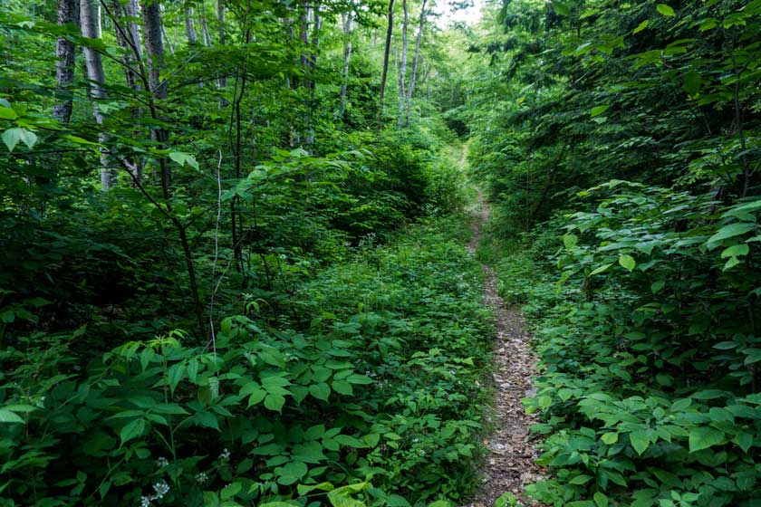 Langdon Hiking Trail Bartlett New Hampshire