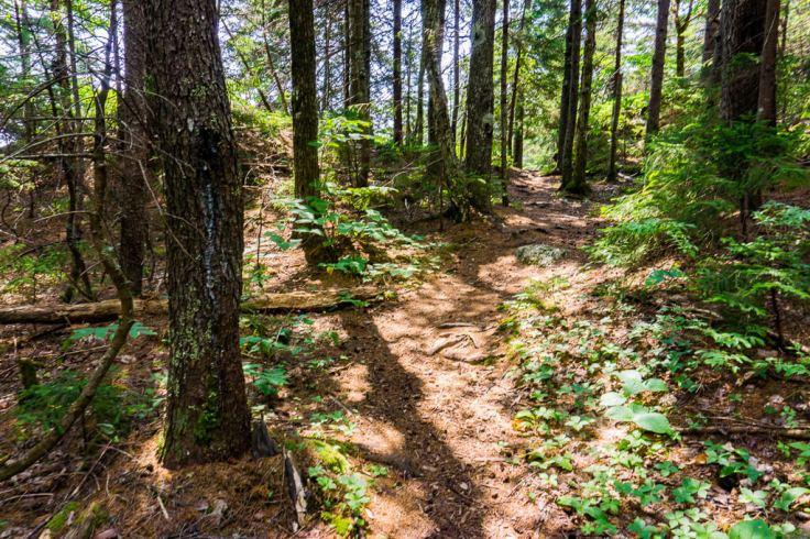 Basin Rim Trail White Mountains